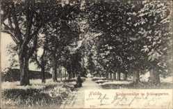 Postcard Fulda in Osthessen, Kastanienallee im Schlossgarten