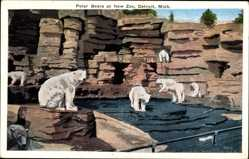 Postcard Detroit Michigan USA, Polar Bears at New Zoo, Eisbärengehege