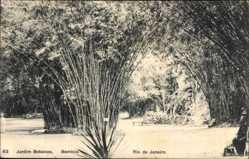Postcard Rio de Janeiro Brasilien, Jardin Botanico, Blick auf Bambus, Gartenanlage