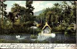 Postcard Insel Madeira Portugal, Jardim Publico, Öffentlicher Garten