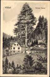 Postcard Bad Wildbad im Kreis Calw Baden Württemberg, Große Tanne beim Forsthaus