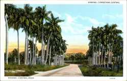Postcard Havanna Kuba, Central Road, Palmenallee, Carretera Central