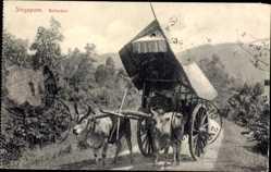 Postcard Singapur, Bullockcart, Ochsenkarren, Bauer, Landweg
