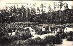 Postcard Dallgow Döberitz im Havelland, Truppenübungsplatz, Vegetation