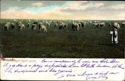 Postcard Hortobagy Ungarn, legelö gulya, Ziegen, Schäfer, Hirte