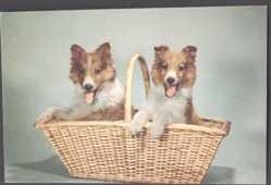 Mechanische Ak Zwei Collies in einem Strohkorb, Hunde, Quietschkissen