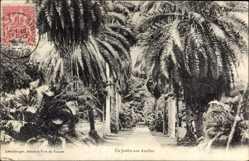 Postcard Fort de France Martinique, Un Jardin aux Antilles, Palmengarten