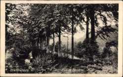 Postcard Bleicherode im Kreis Nordhausen, Blick im Bleichtal, Wald, Berge