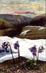 Ak Soldanella Alpina, Alpen Soldanelle, Nenke und Ostermaier 508 783