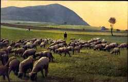 Ak Schafherde am Schladniger Berg bei Bilin, Nenke und Ostermaier 128 2520