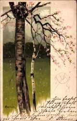 Künstler Litho Mailick, Birken, Frühling, Baumblüte