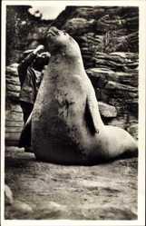 Postcard Hamburg Stellingen, Hagenbecks Tierpark, Seeelefant mit Pfleger