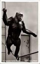 Postcard Zoologischer Garten Berlin, Schimpanse Titine balanciert auf einem Seil