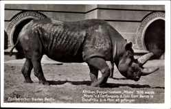 Postcard Zoologischer Garten Berlin, Afrikanisches Doppelnashorn, Mtoto