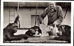 Postcard Zoologischer Garten Berlin, Schimpansinnen Titine, Sudi und Lore, Mahlzeit