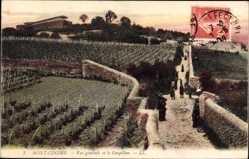 Ak Mont Cindre Rhône, Vue générale et le Grapillon, Anbaufelder