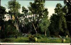Postcard Victoria Chile, Montana, Vegetation, Mann mit Holzbündel