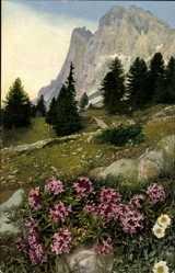 Ak Photochromie, Dryas octopetala, Nenke und Ostermaier 521 928, Alpenflora