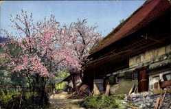 Postcard Gutachtal Schwarzwald, Nenke und Ostermaier 169 3005