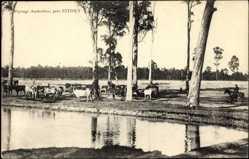 Ansichtskarte / Postkarte Sydney in Australien, Viehhaltung, Kuhherde am Fluss