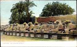 Postcard Karnak Ägypten, View of the the Spyhnx Street, Plamen, Statuen, Sphinx