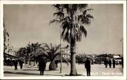 Postcard Split Kroatien, Palme na obali, Palmenpromenade
