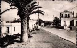 Postcard La Marsa Tunesien, Avenue de la Residence, Palmen