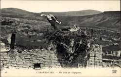 Postcard Constantine Algerien, Un Nid de Cigognes, Blick auf Storchennest