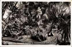 Perseusgruppe, Pflanzenschauhaus