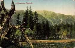 Feldseemoor, Seebuck