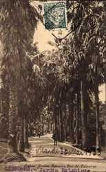 Jardin Botanico, Ruo de Palmeiras