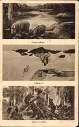 Zoologischer Garten, Willy Kohlmeyer, Bären, Nilpferde