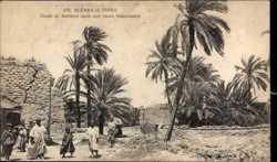 Dattiers, Oasis Saharienne